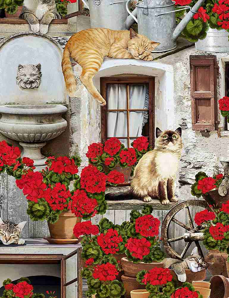 CAT-C6381 / PORCH / CATS AND GERANIUMS
