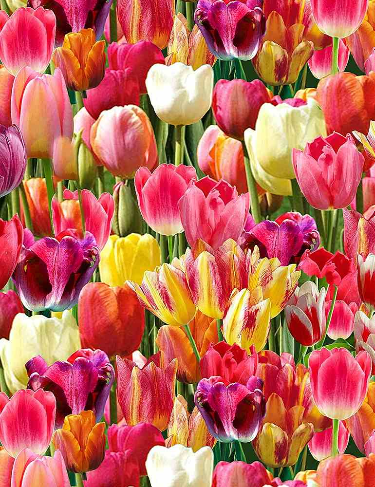 NATURE-C6711 / BRIGHT / PACKED TULIPS