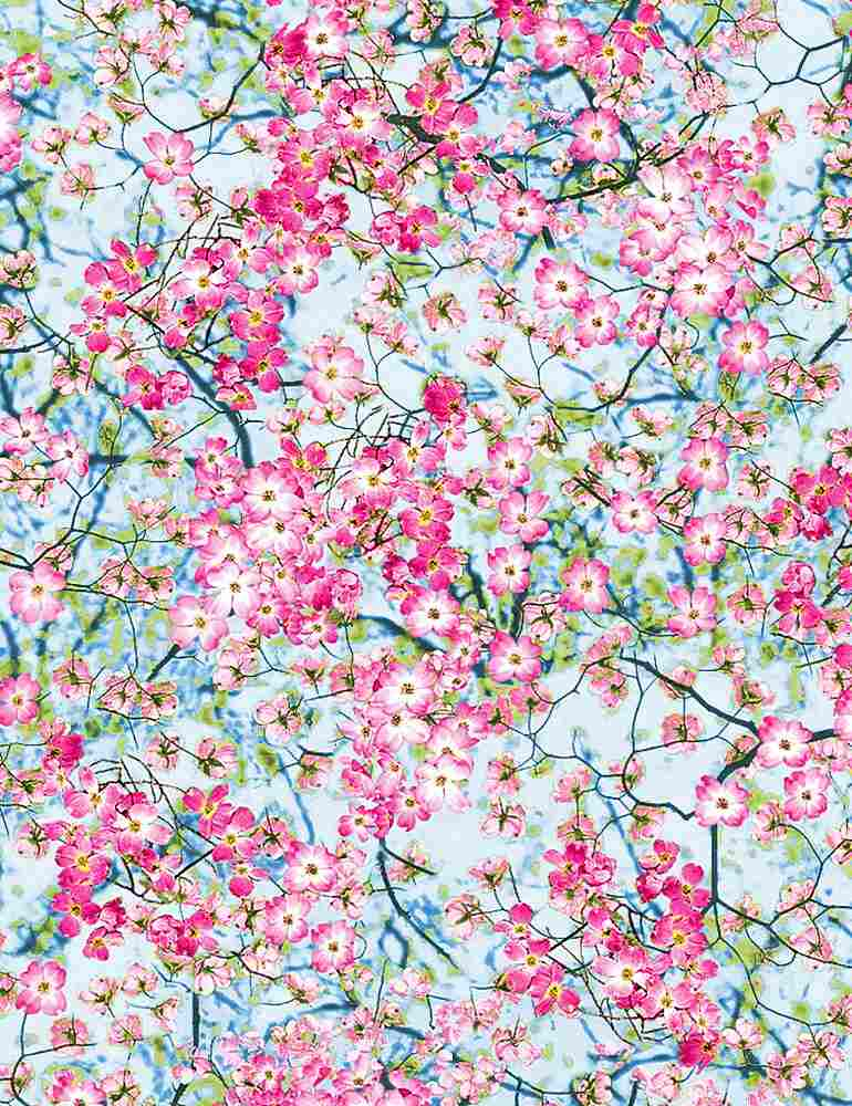 NATURE-C2763/SPRING / FLOWERYSKY