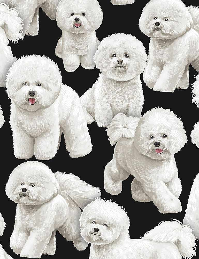 GM-C7526 / BLACK / BICHON FRISE