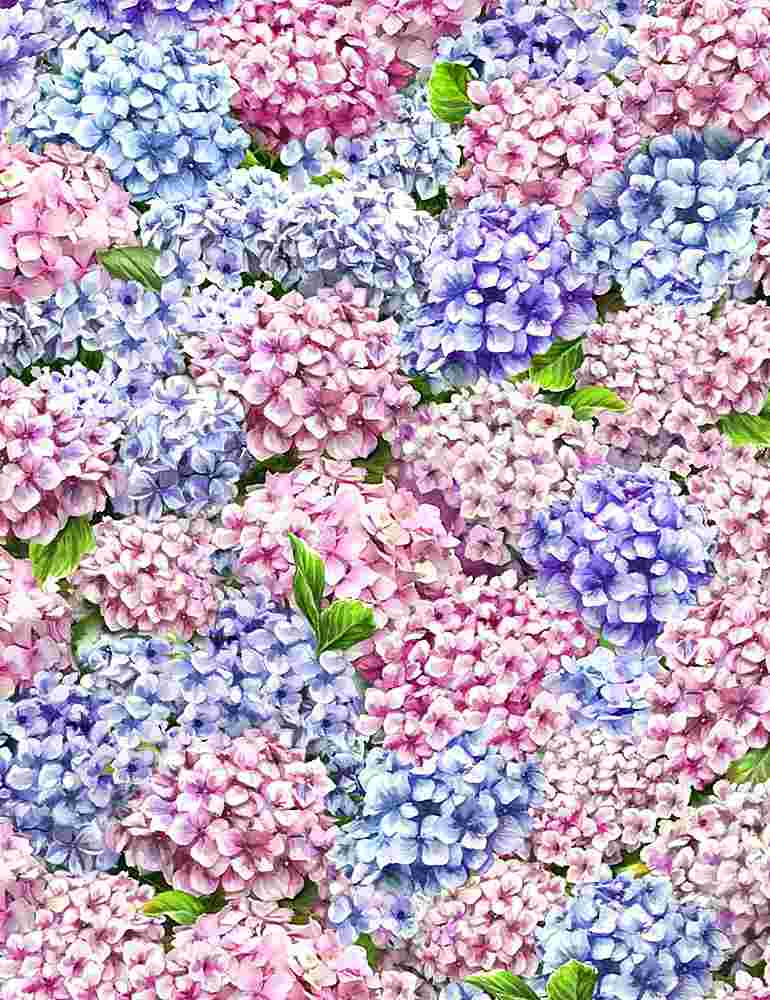 DONA-C8002 / MULTI / PACKED HYDRANGEAS
