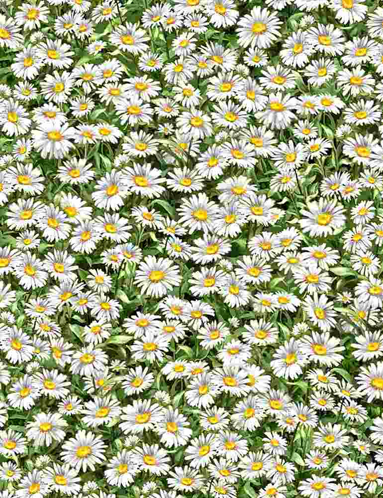 DONA-C8003 / MULTI / PACKED DAISIES WITH LEAVES
