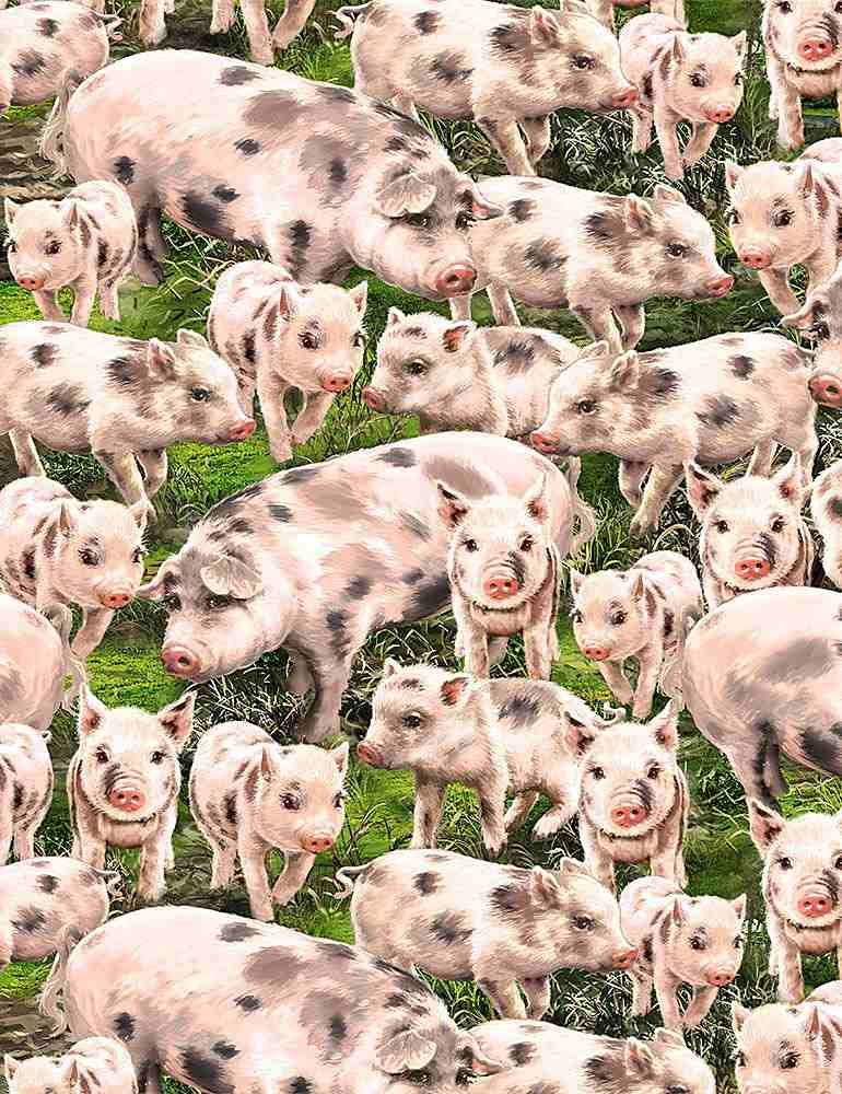 DONA-C8338 / MULTI / PACKED PIGS