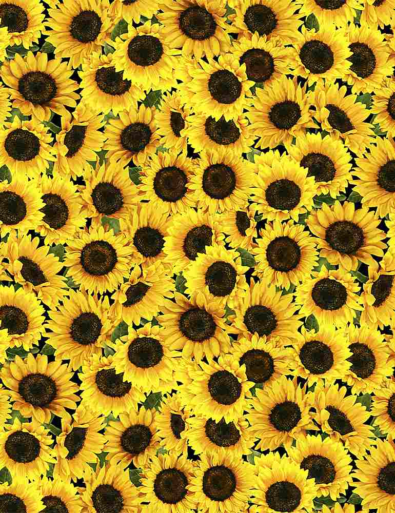 FLEUR-C8781 / YELLOW / PACKED SUNFLOWERS