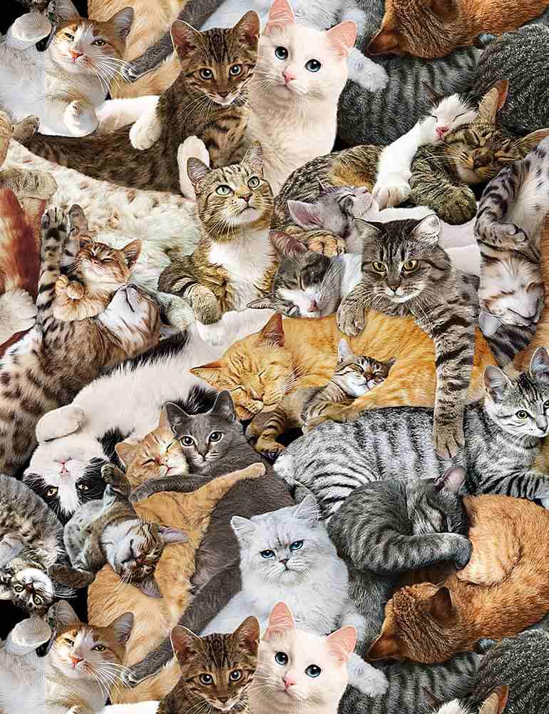 CAT-C1033/MULTI / CUDDLINGCATS