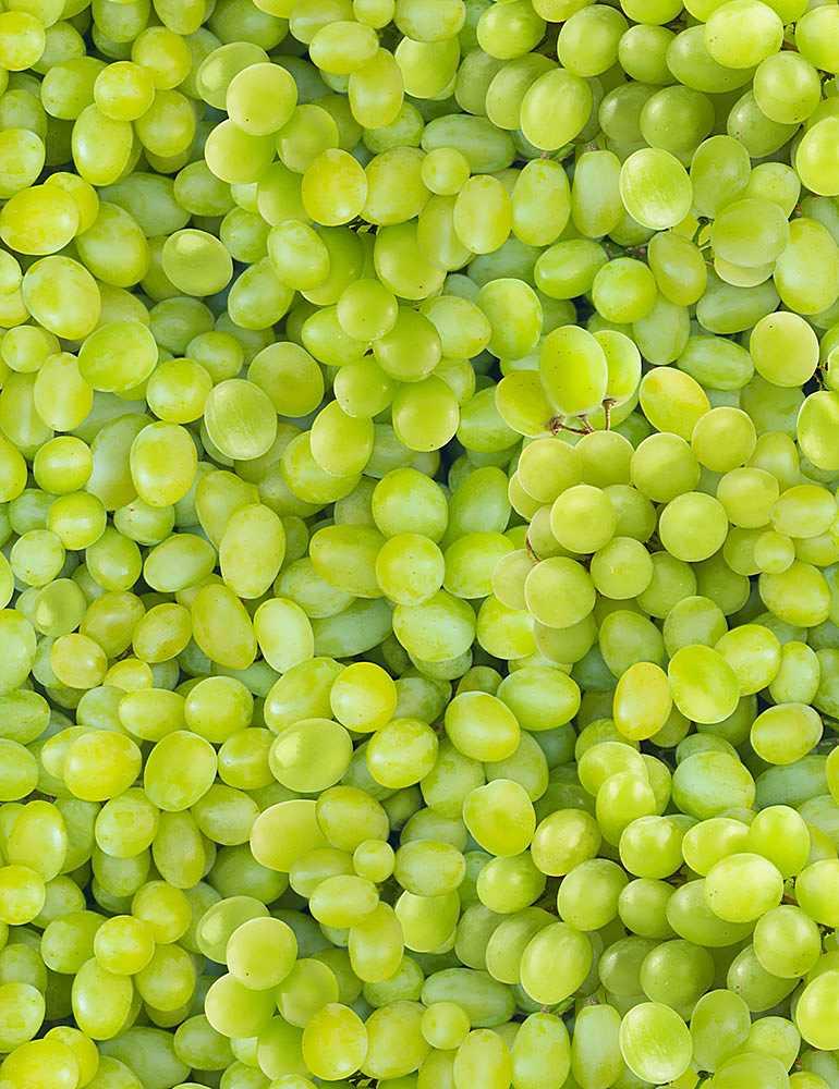 FRUIT-CD1373/GREEN / PACKEDGRAPES